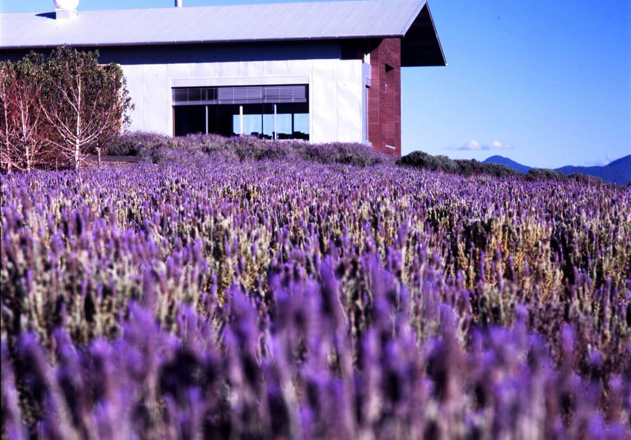 Kooroomba Lavender Farm