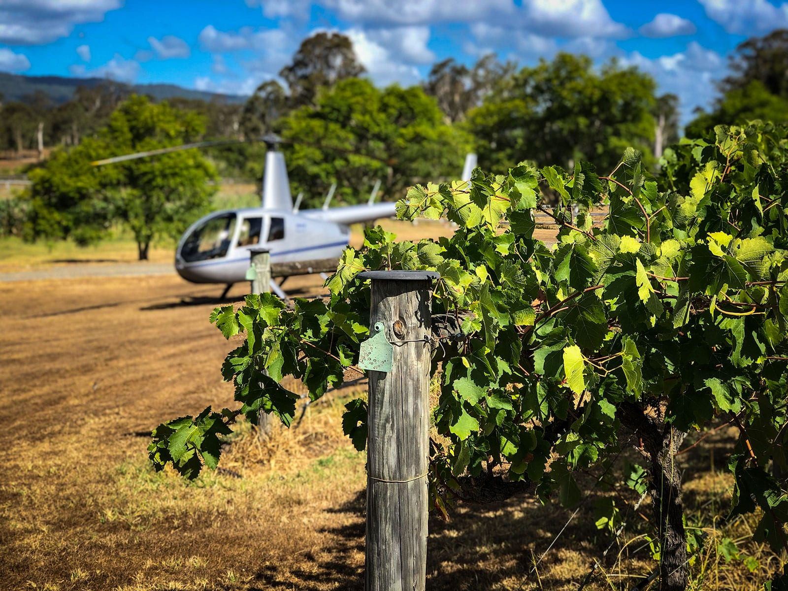 Helicopter Landing for Wine Tour