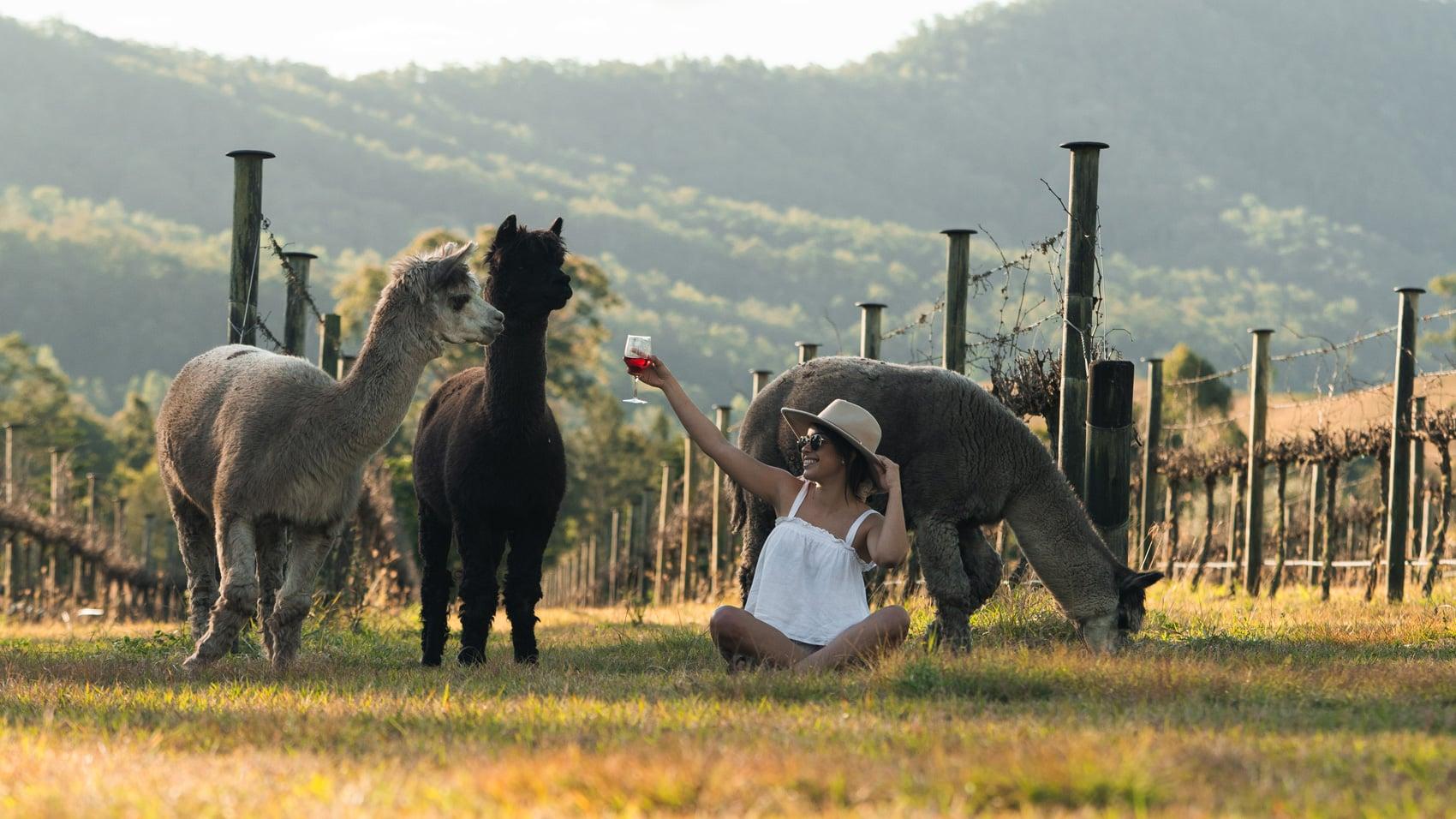alpacas-sarabah-estate